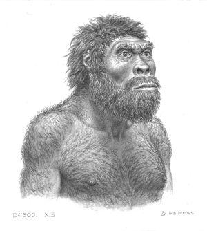 Ilustración del individuo del cráneo número 5 de Dmanisi. / j.h. matternes