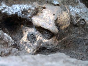 El cráneo número 5 de Dmanisi en el yacimiento. / Georgian National Museum